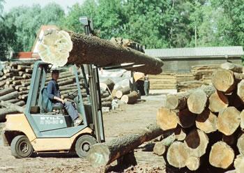 Holzhandel Insel Rügen Holz Bretter Holzlatten Schnittholz Inklusive